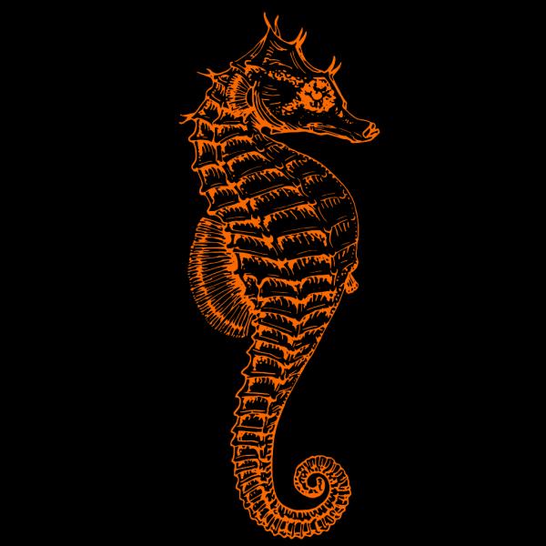 Seahorse Orange PNG Clip art