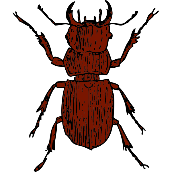 Brown Stag Beetle PNG Clip art