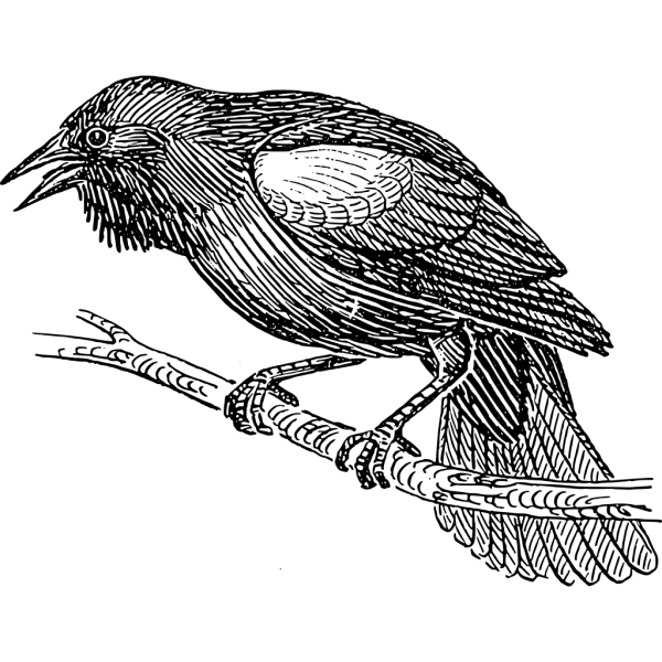 Black Bird PNG Clip art
