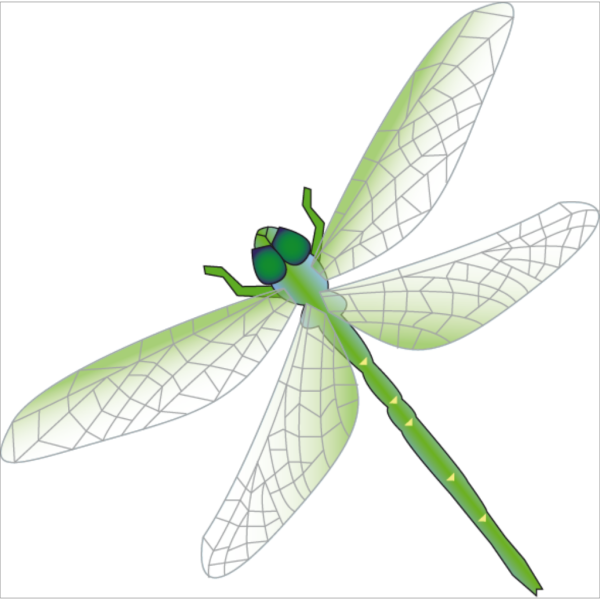Dragon Fly PNG icon
