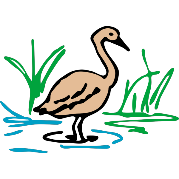 Light Brown Duck Standing In Water PNG icon