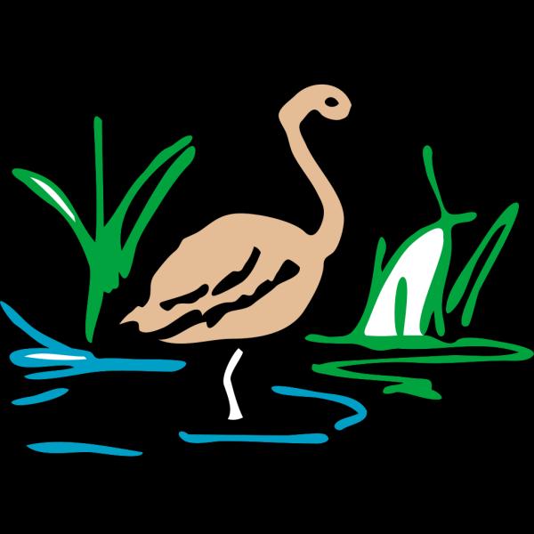 Light Brown Duck Standing In Water PNG Clip art