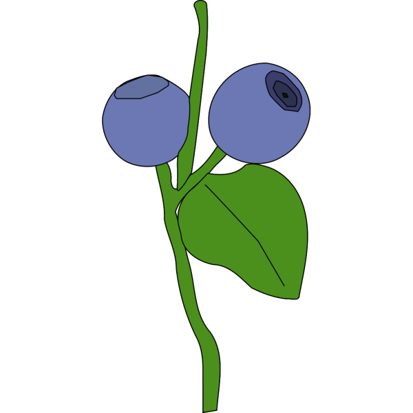 Blue Berry PNG images