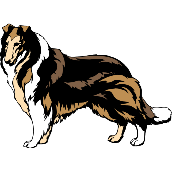 Black And Brown Collie PNG Clip art