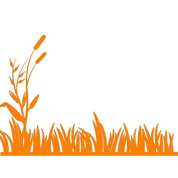 Cattails Outline Green/brown PNG Clip art