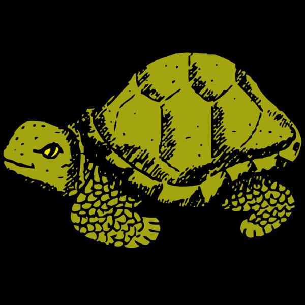 Tortoise PNG Clip art