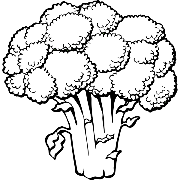 Broccoli Outline  PNG Clip art