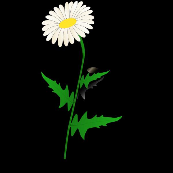 Daisy Modification PNG Clip art