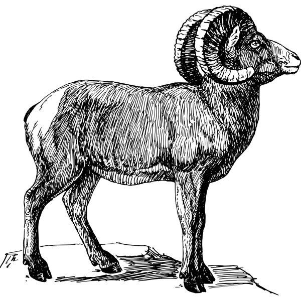 Bighorn Drawing PNG Clip art