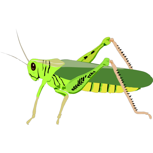 Cartoon Grasshopper PNG Clip art