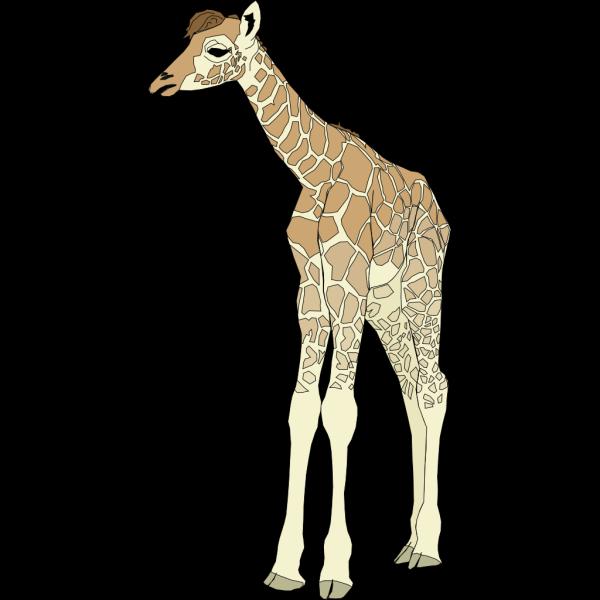 Baby Giraffe PNG Clip art