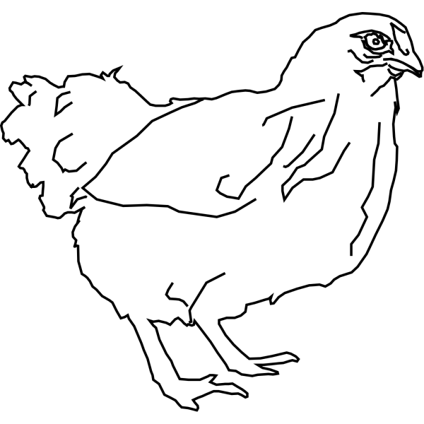 Chicken Outline PNG Clip art