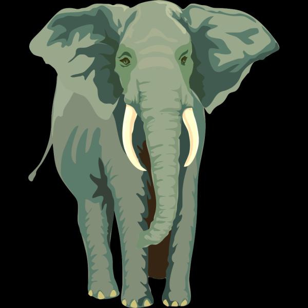 Elephant Front View PNG Clip art