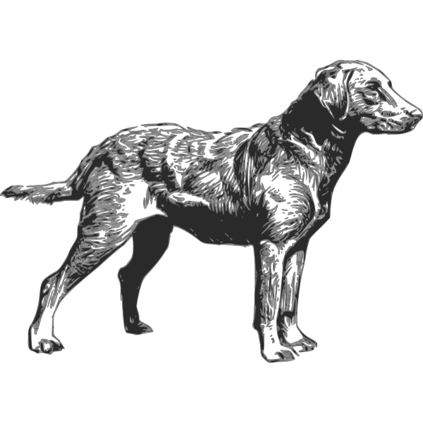 Chesapeake Bay Retriever PNG Clip art