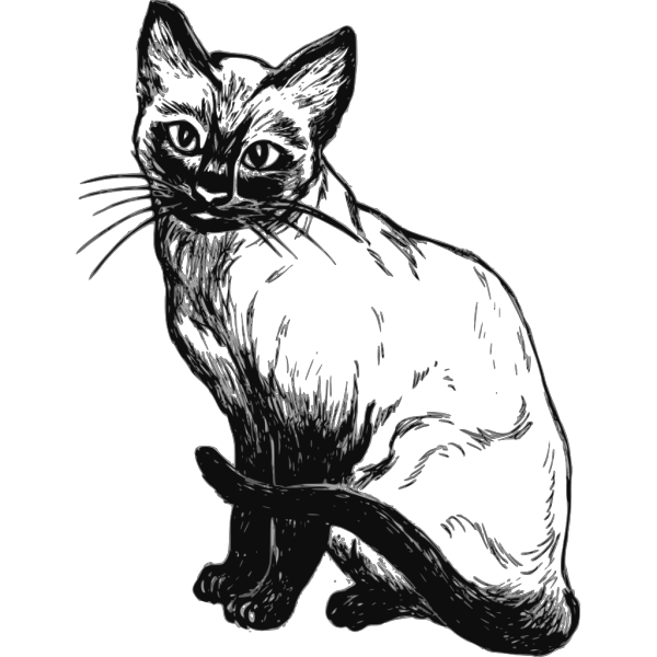 Siamese Cat Drawing PNG images