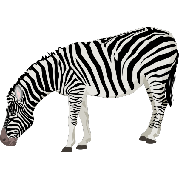 Grazing Zebra PNG images