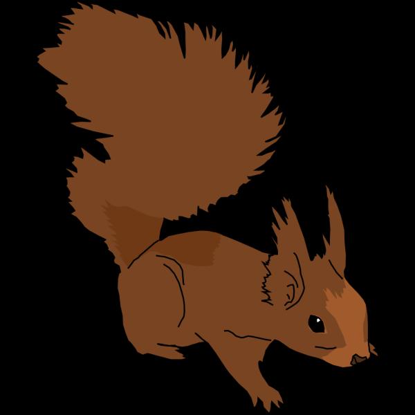 Alert Squirrel PNG Clip art