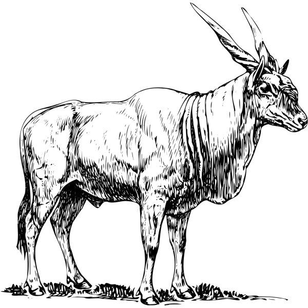 Eland Drawing PNG Clip art