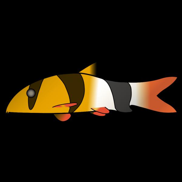 Clown Loach PNG Clip art