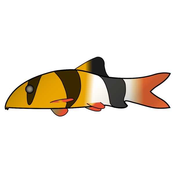 Clown Loach PNG images
