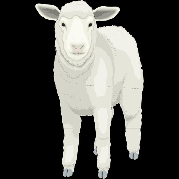 Wooly Sheep Facing Forward PNG Clip art