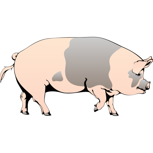 Spotted Pig PNG Clip art