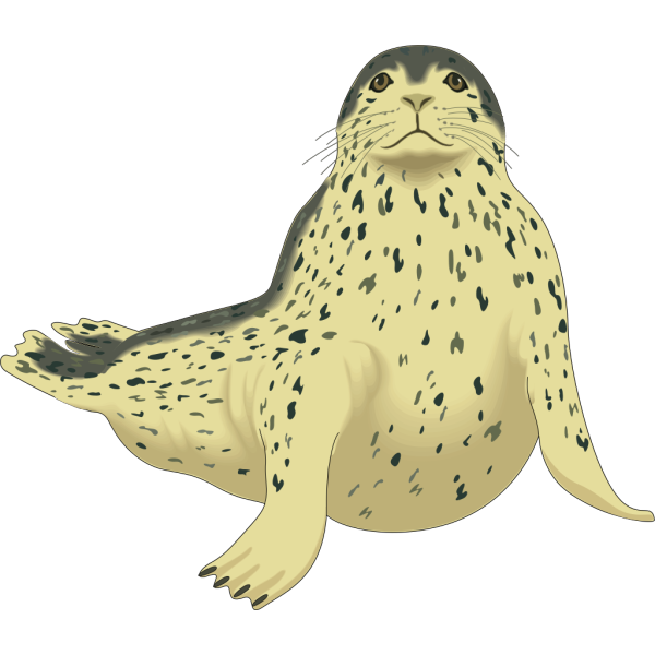 Spotted Seal PNG Clip art