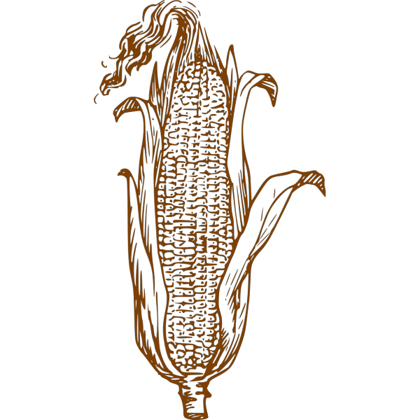 Brown Corn PNG images