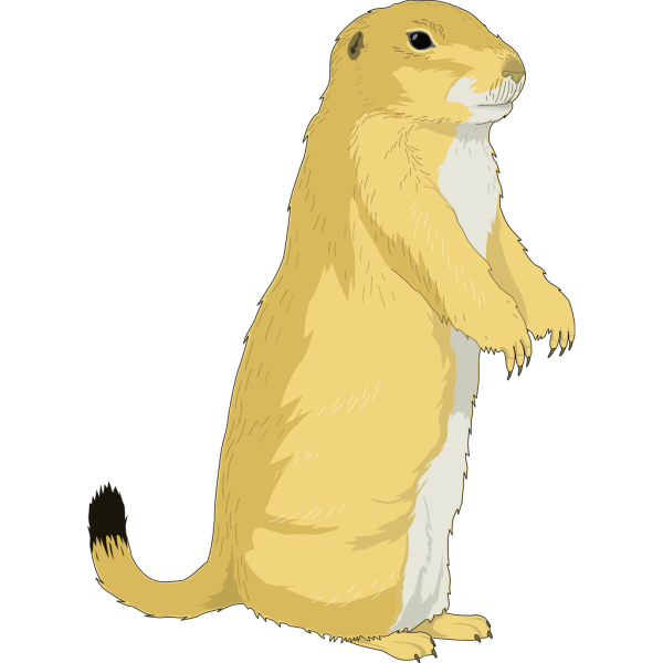 Ground Squirel PNG Clip art