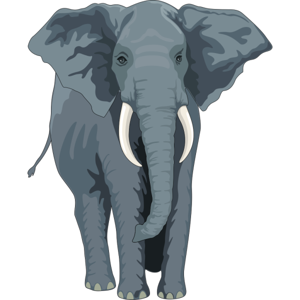 Walking Elephant Front View PNG Clip art