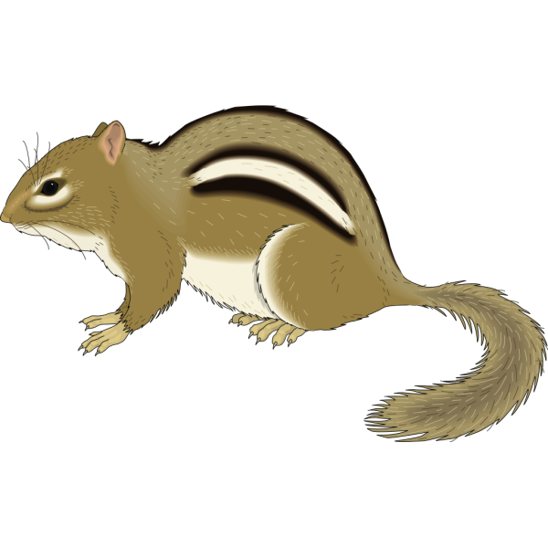 Chipmunk Staying Still PNG Clip art
