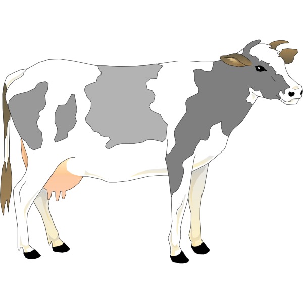Gray And White Standing Cow PNG Clip art