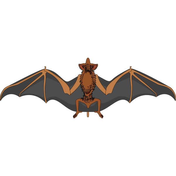 Bat With Spread Wings PNG Clip art