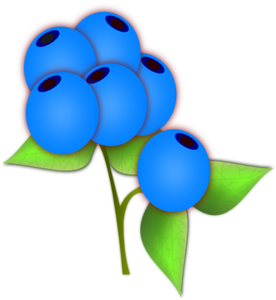 Blueberries PNG icons