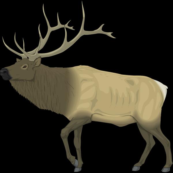 Large Moose PNG Clip art