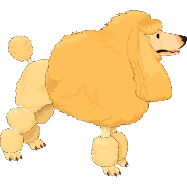 Fluffy Yellow Poodle PNG Clip art