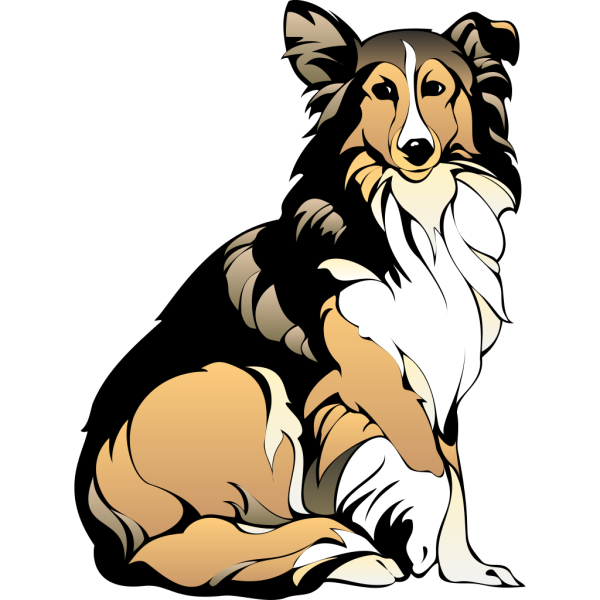 Sitting Collie PNG Clip art