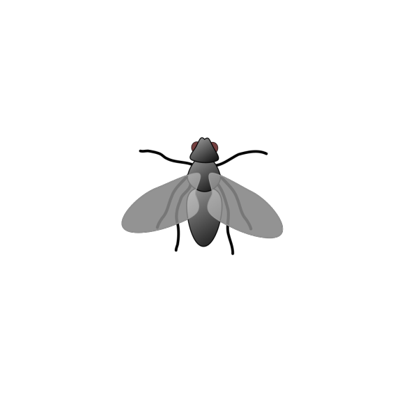 Fly3 PNG images