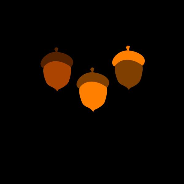 Acorns PNG Clip art