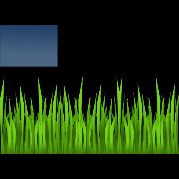 Grasshopper PNG images