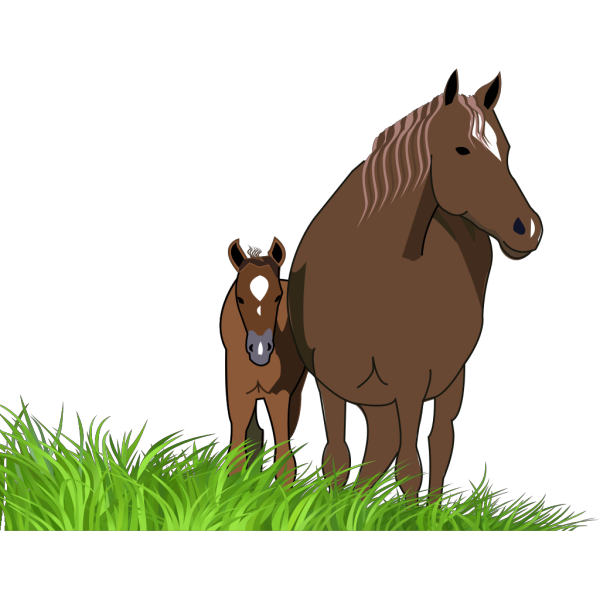 Horses PNG images