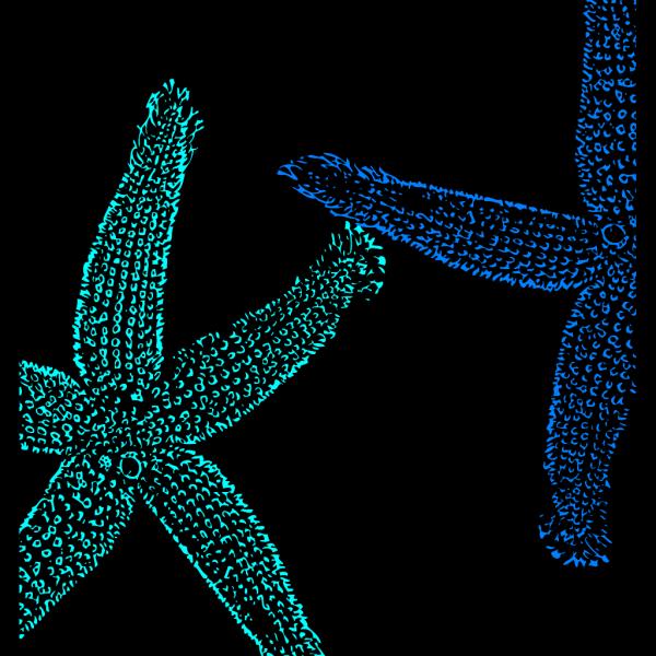 Blue Starfish PNG Clip art