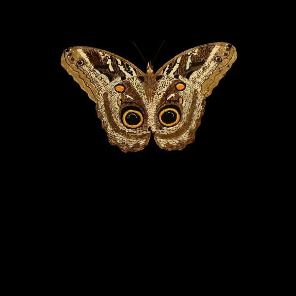 Moth PNG Clip art