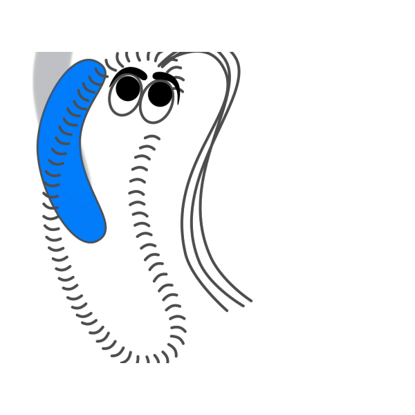 Bacteria Blue Funny PNG images