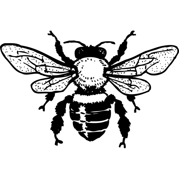 Honey Bee PNG images