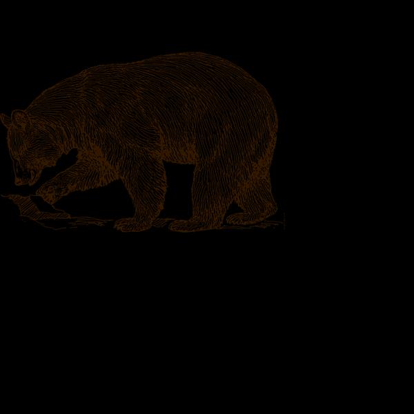 Bear Brown PNG Clip art