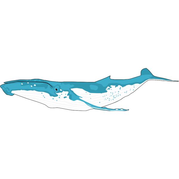 Whale Cartoon PNG Clip art