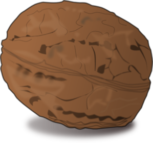 Shaded Walnut PNG Clip art