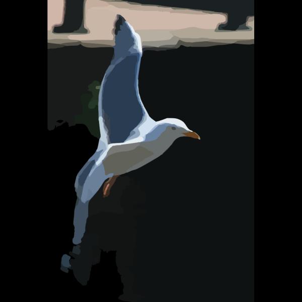 Gull Bird PNG Clip art