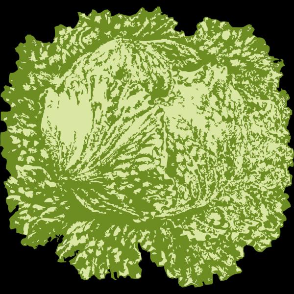 Lettuce PNG Clip art